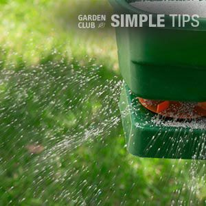 Seed and Feed Lawns NowGarden Club