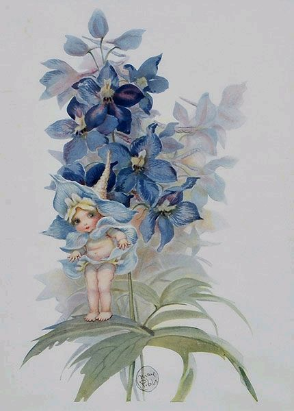 May Gibbs, Blue Orchids