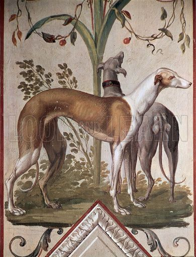 1000 images about animals on pinterest whippets for Tattoo shops in elyria ohio