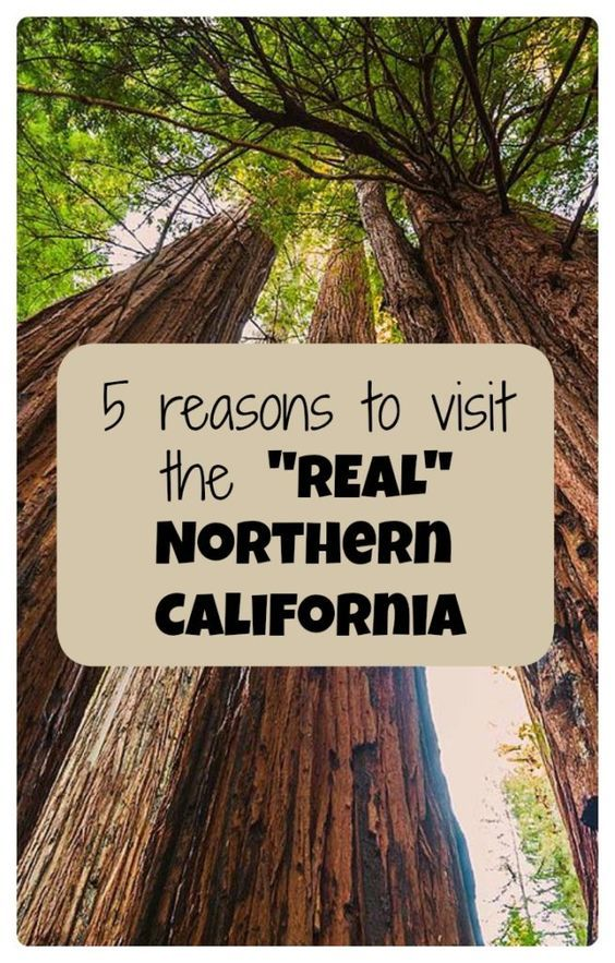 Forget San Francisco and the Bay Area - travel to the REAL Northern California - Sequoia, Redwoods and other road trips