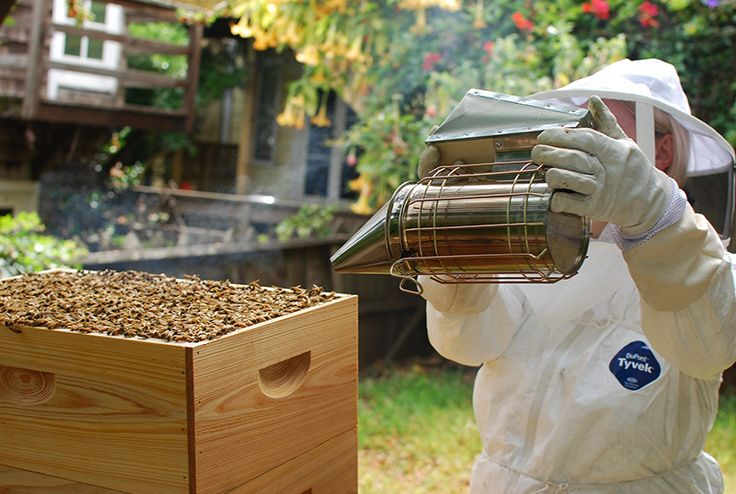 Dealing with problem neighbors | Bee keeping, Bee, Raising ...