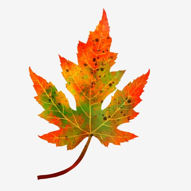 Autumn And Winter Maple Leaves Hand Drawn Plant Simple Autumn And