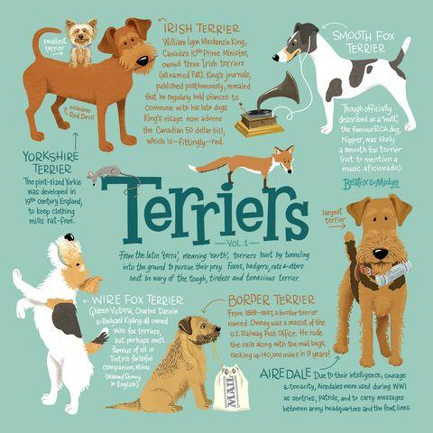 Terriers Vol. 1 Canvas
