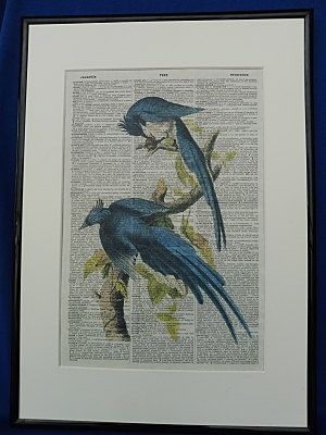 Magpie Jay Birds Wall Art Print by DecorisDesigns on Etsy