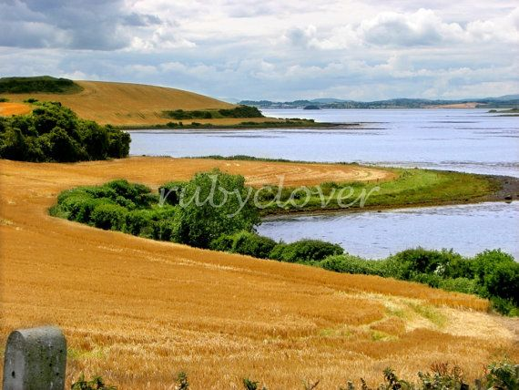 Fields of Gold Northern IRELAND Landscape Photo by rubyclover (Art & Collectibles, Photography, Color, kircubbin, greyabbey, portaferry, county down, norn iron, ireland photography, st patricks photo, northern ireland, fields of gold photo, wheat field photo, golden field, cool landscape, eva cassidy)