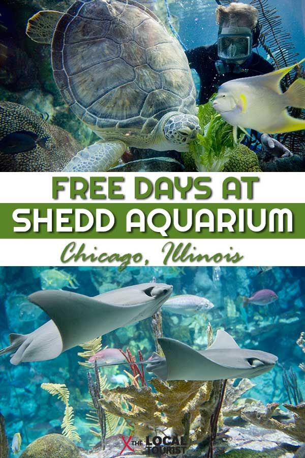Visiting Chicago S Shedd Aquarium
