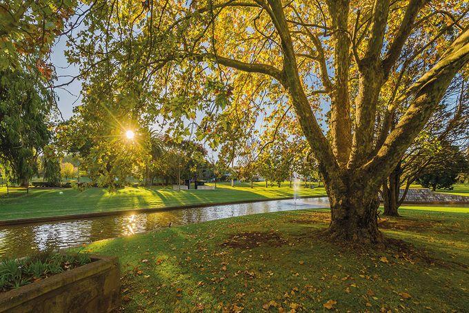 Toowoomba Autumn Leaf Trail