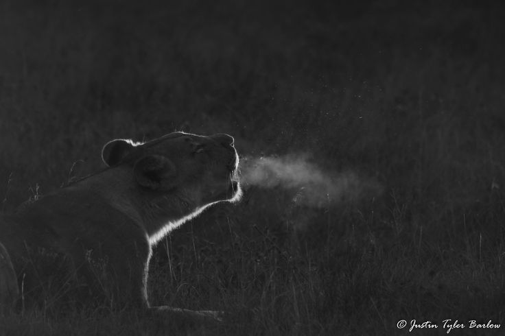 An amazing moment captured on the Amakhala Game Reserve.  {Photographed by: Ranger Justin Tyler}