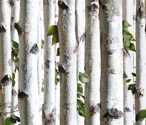 Koziel tapet med birketræ stammer. Super flot at tage naturen med ind på denne måde. Se selv.