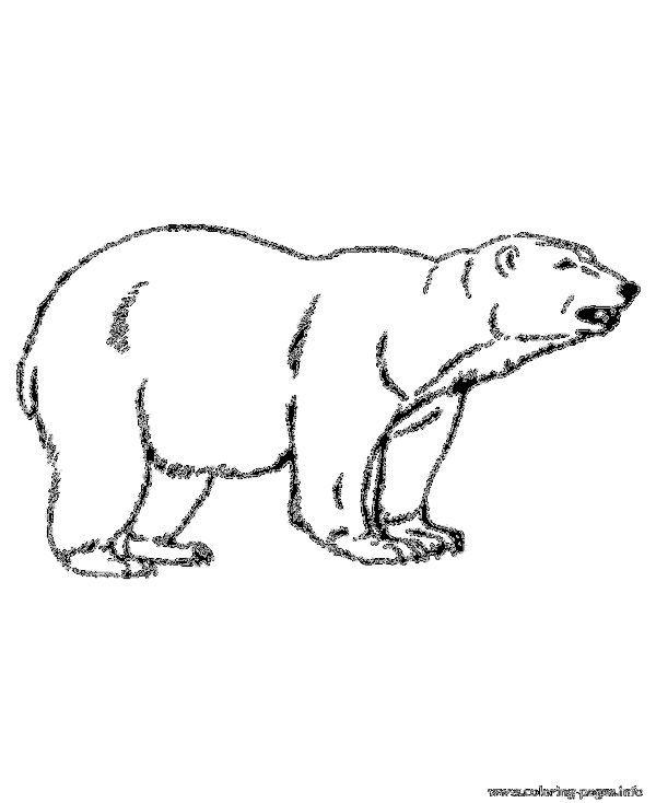 Animal Polar Bear Color Pages To Print Polar Bear Color Polar Bear Polar Bear Coloring Page
