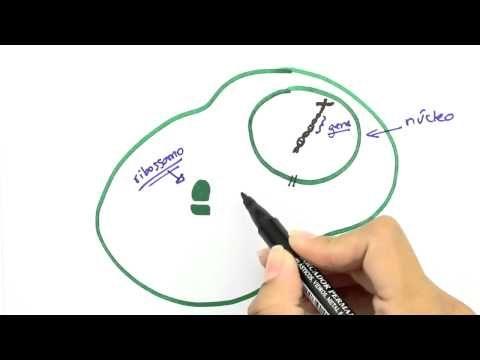 Me Salva! GEN01 - Introdução à genética molecular - YouTube
