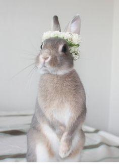 Cat Getting Flower Put On Head