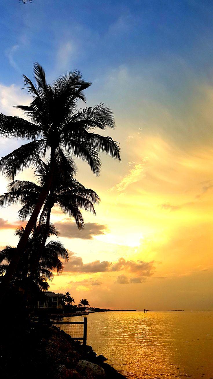 Manatees and Dolphins - Captiva Island, Florida  Visit Florida  Fort Myers Beaches  Sanibel and Captiva Island  USA