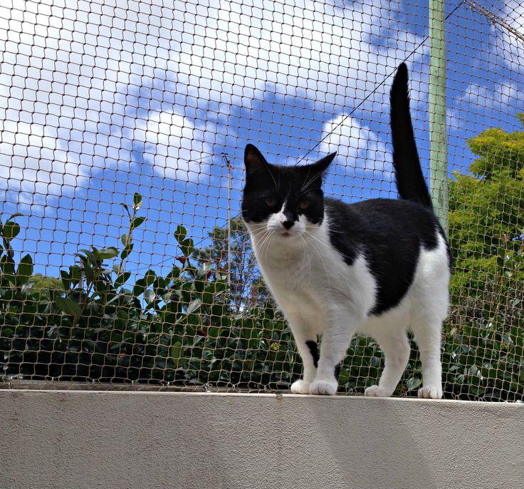 Lucy enjoying her catmax backyard