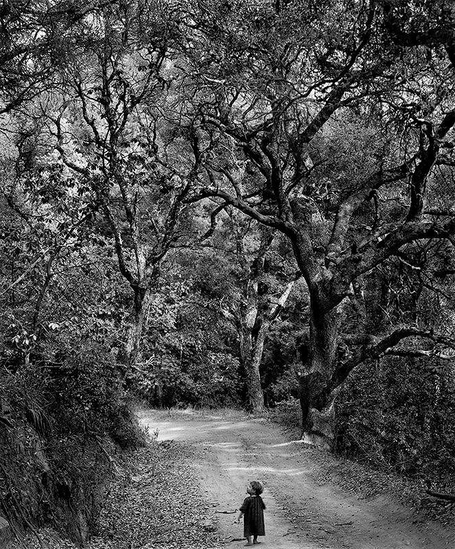 Wynn Bullock: Child on a Forest Road (1958)