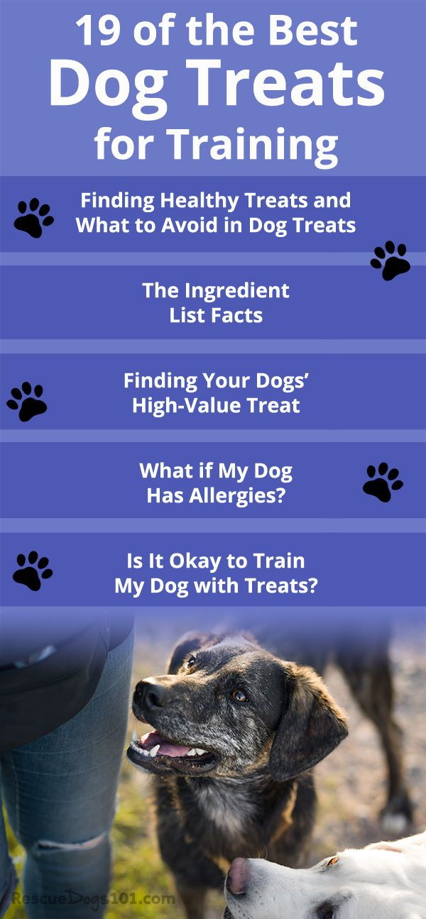 My Top 19 Recommended Dog Treats For Training List Dog Training