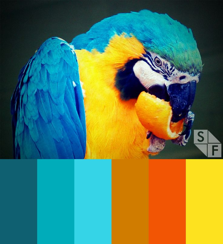 125 Best Beach Tropical Color Schemes Images On