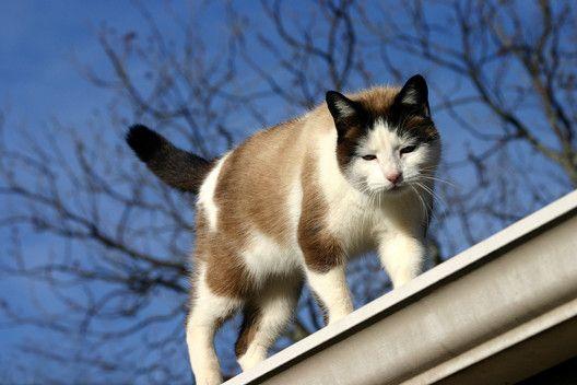 Dlaczego kot podtyka nam zadek pod nos?