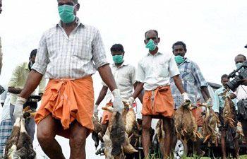 "#Bird flu: Chandigarh's Sukhna Lake cordoned off"" Read more.. #Birdfluchandigarh #Indiamarkethub #Sukhnalake"