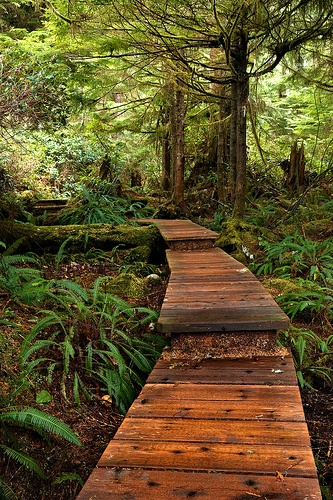 Boardwalk through the forest, Pacific Rim National Park, Canada