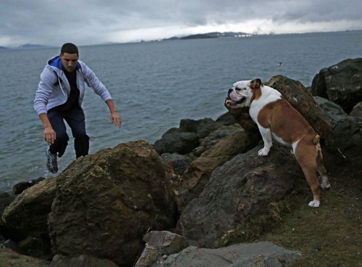 For Warriors' Klay Thompson, time with dog is time well spent - San Francisco Chronicle
