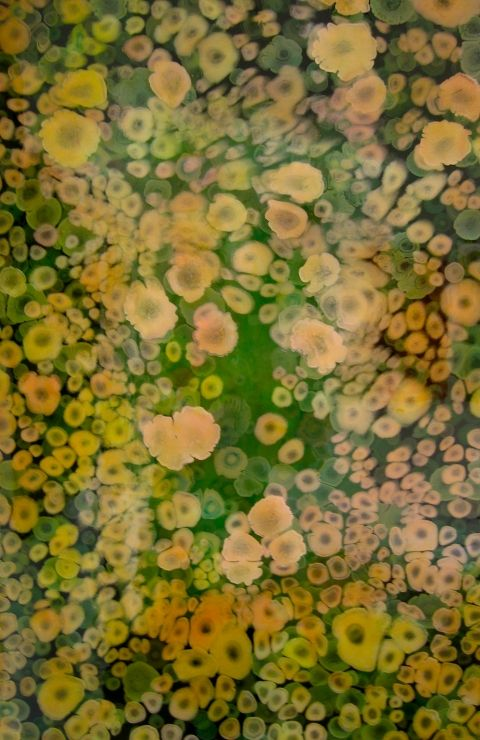 """Laura Gurton  From the Biomorphic Dream series #4  2008  Oil and Alkyd on Panel  24"""" x 36"""""""