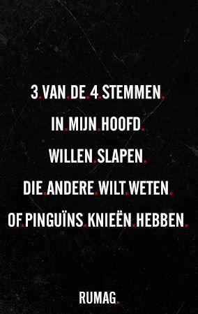 #Rumag #Quotes Drie van de vier stemmen in mijn hoofd willen slapen. Die andere wil weten of pinguïns knieën hebben