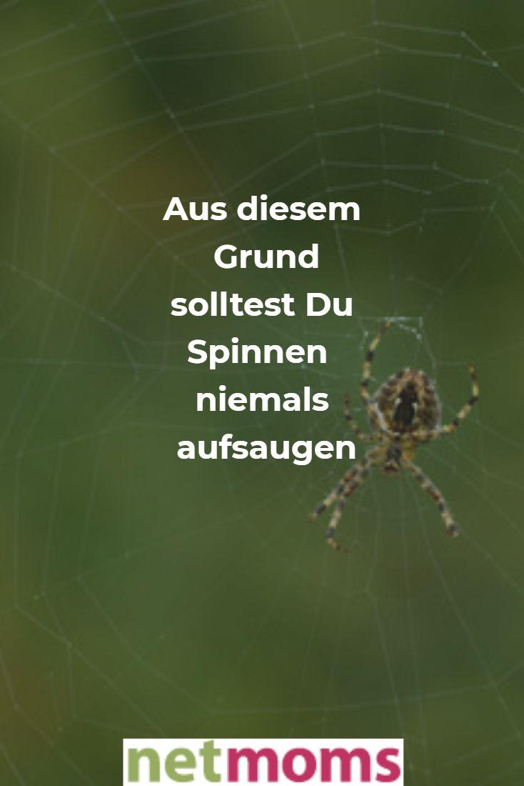 Igitt Spinnen In Der Wohnung Aufsaugen Hilft Nicht Familienleben
