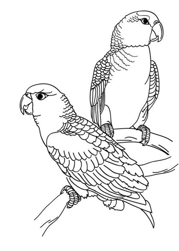 Zwei Sittiche Zum Malen Malen Ausmalbilder Vögel Ausmalbilder