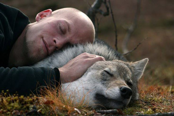 Wolf Sanctuary In Norway Lets You Cuddle Wolves While Watching The Northern Lights Credit: Polar Park
