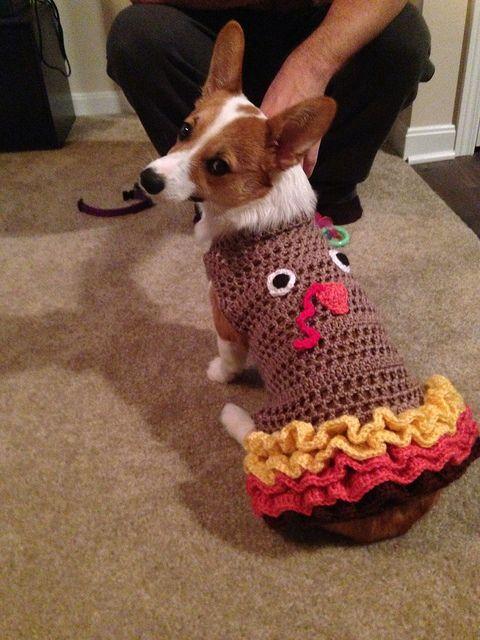 Turkey corgi! XD Hopefully she gets some turkey treats this Thanksgiving to make up for the costume!