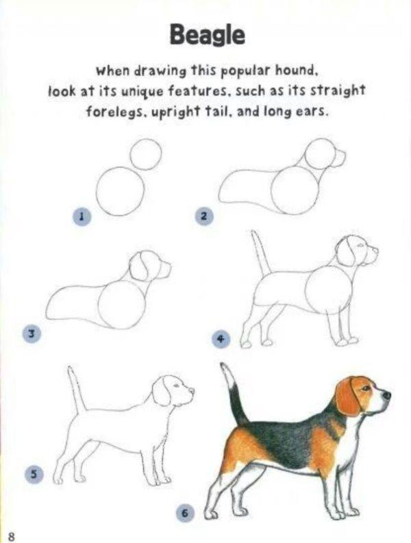 wie ein hund einfach schritt für schritt zu zeichnen 35