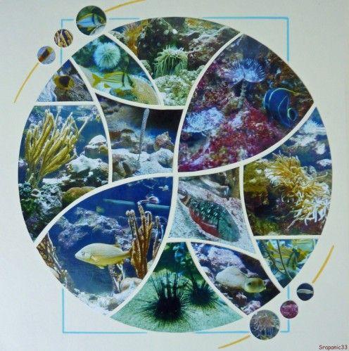 Page de l'an dernier que j'aime beaucoup. Ce sont des photos de l'aquarium du Gosier en Guadeloupe.  Gabarit Scrapflowers 4x4.
