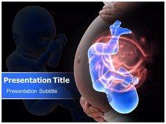 #Human Fetus Development PowerPoint Template