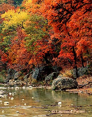Lost maples state park texas texas my texas pinterest