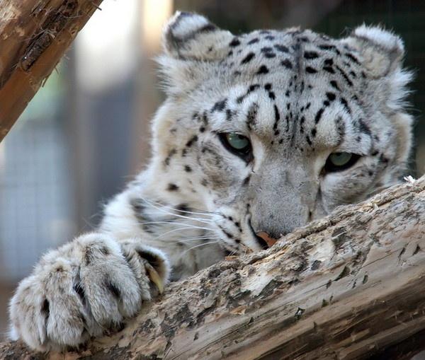 Les animaux, un seul regard pour percevoir leur intelligence