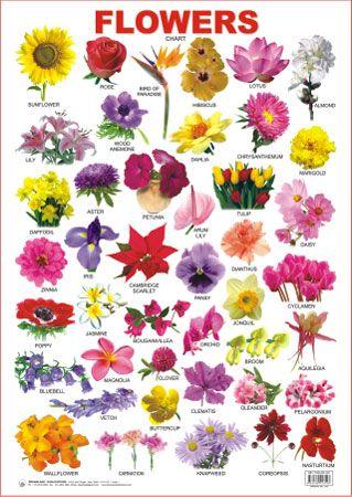 Flower, Google and Google images on Pinterest