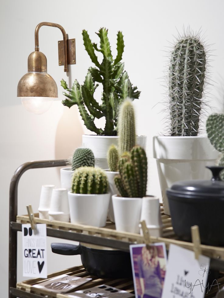 I see a lot of cactus plants in your house (also in the bedroom) maybe you could all put them in similar white pots and put them together in the window on different heights