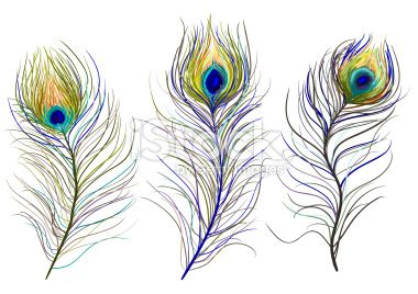 Paon, Plume, Vectoriel, Fond blanc, Bleu Illustration vectorielle libre de droits