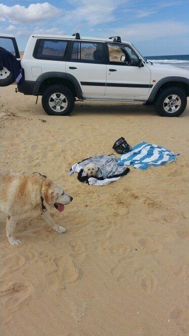 Taj & jessie beach adventures.