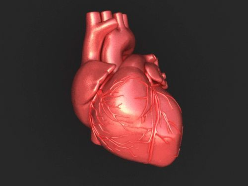 225 Best My Beating Heart Images On Pinterest: Realistic Beating Heart Animation??-heart.gif