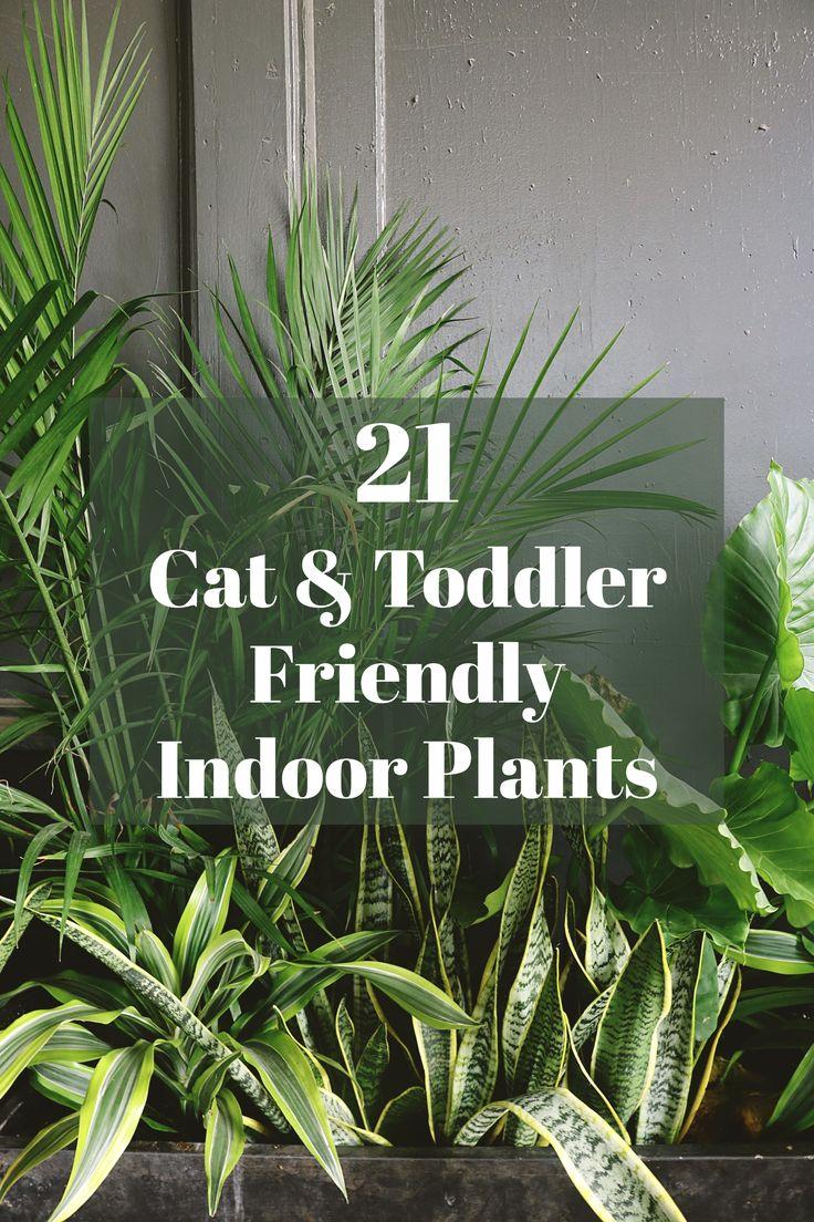 21 Cat & Toddler Friendly Indoor Plants Cat safe house