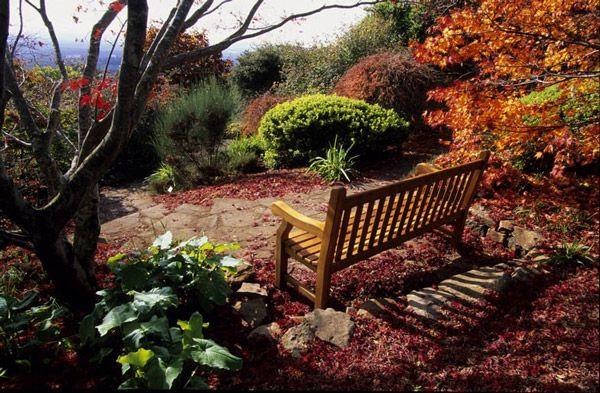 The bench at Mount Tomah Botanical Garden, NSW, Australia