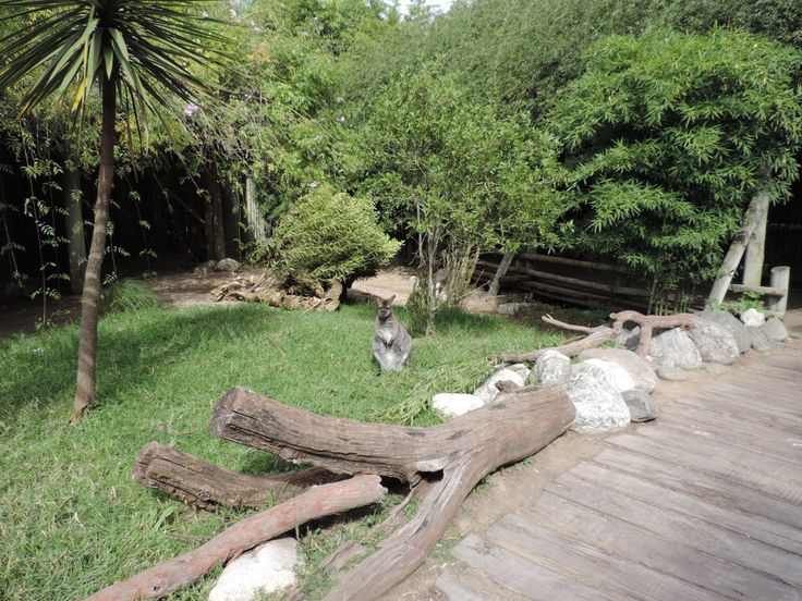 Temaikèn – O bioparque argentino - Furos de Carol #buenosaires #temaiken #zoo #lujan #argentina #tigre #viagem #travel #animal #bioparque #kangaroo #canguru