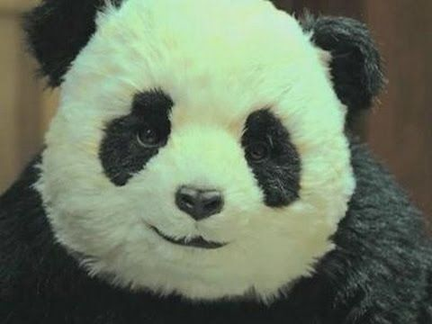 Mai dire no al panda - http://www.youtube.com/davidepiubello