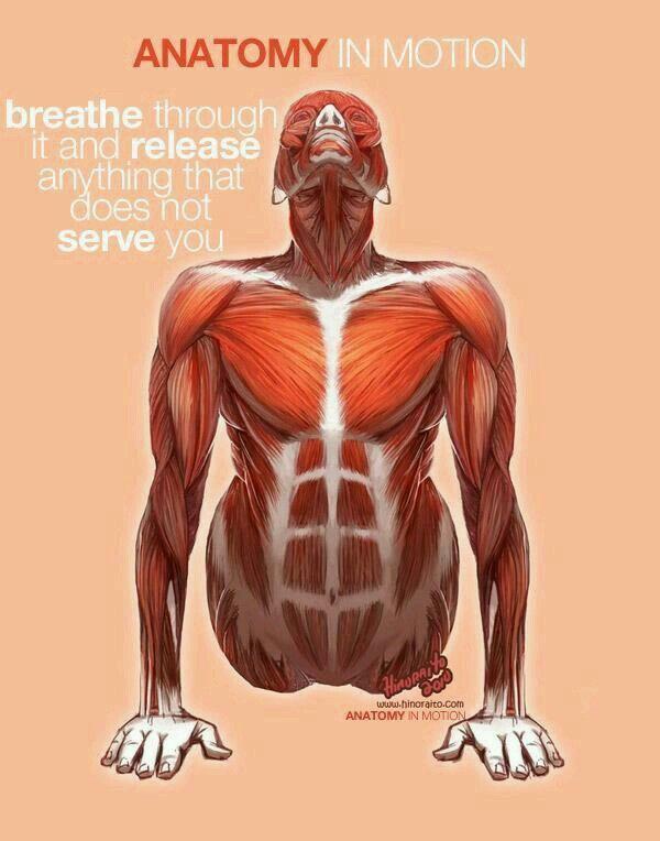 74 best Anatomy of Movement - Pilates Anatomy images on Pinterest ...