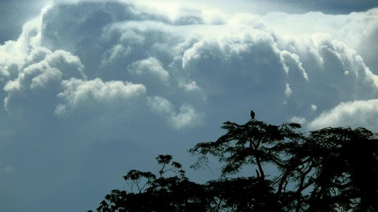 Gallinazo contra nube (2008)