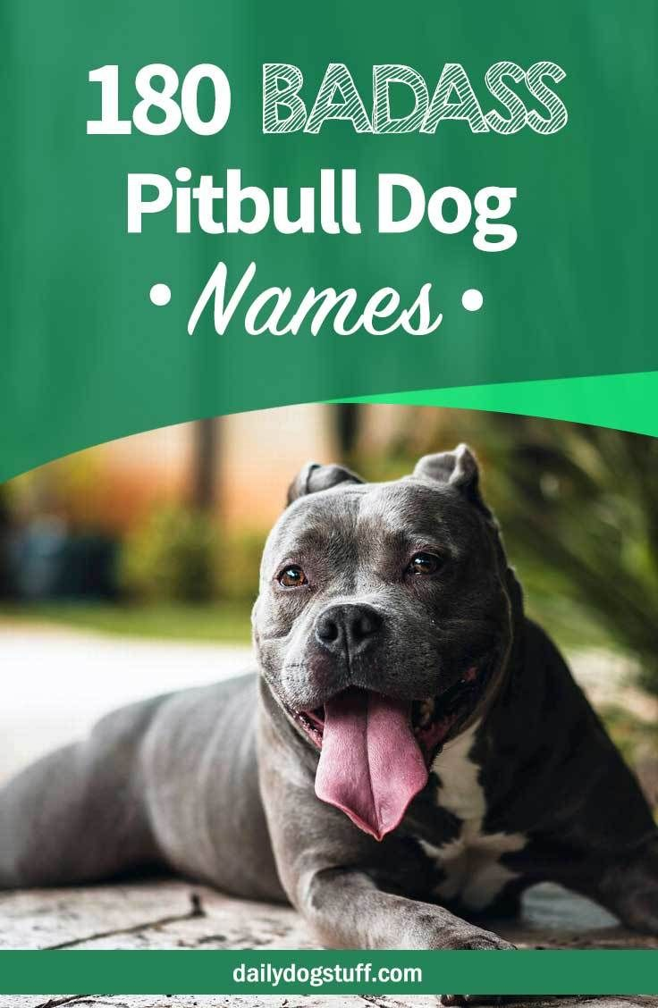 Top 180 Pitbull Dog Names From Male To Female Badass To Cute