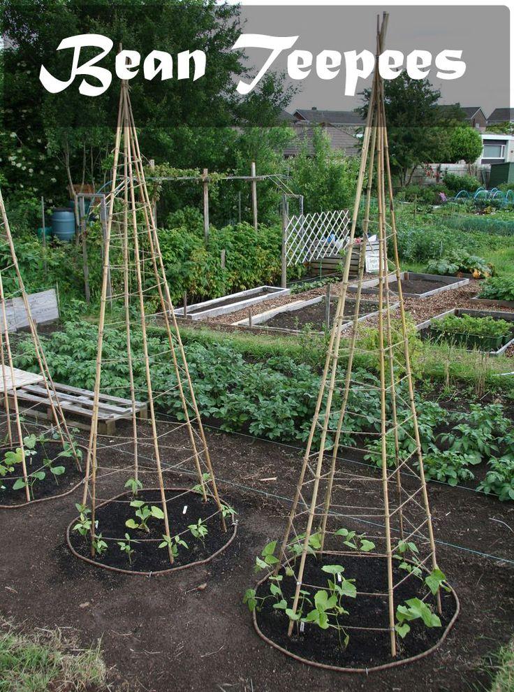 Planting Beans,growing pole beans,runner bean plant,pole bean seeds,bush beans plant,green bean seeds,garden bean plant,green bean garden