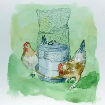 Chickens like to roos on top of their feeders, which can lead to a big mess! Wrap a little chicken wire around the top and they'll stay off!   Living the Country Life   http://www.livingthecountrylife.com/buildings/outdoor-ideas/all-around-the-homestead-spring-2011/